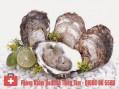 Thực phẩm tăng cường sinh lý nam và nữ